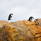 Penguins, South Africa by Amber  Williams