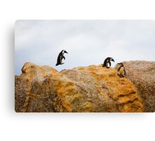 Penguins, South Africa Canvas Print