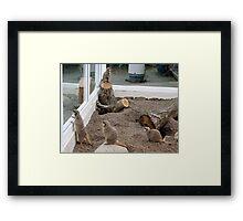Meerkats ( John George Paul & Ringo) Framed Print
