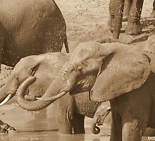 Sepia Mud Bath by Donald  Mavor