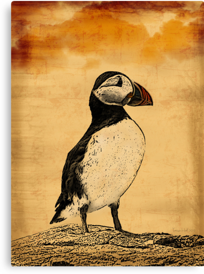 Puffin Print by Moonlake