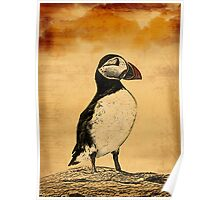 Puffin Print Poster