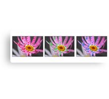 Daisy Triptych on White Canvas Print