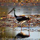The Lone Stork by byronbackyard
