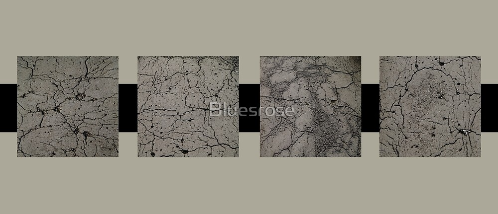 Pavement by Bluesrose