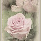 Pink Roses With a Vintage feel by VintagePT