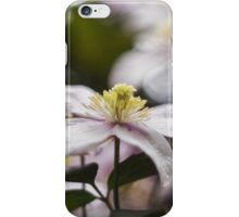 Pretty Pink Clematis flowers iPhone Case/Skin