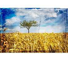 Single tree in a wheat field Photographic Print