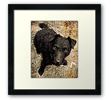 Fergus, Wire-Haired Patterdale Terrier Framed Print