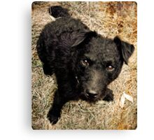Fergus, Wire-Haired Patterdale Terrier Canvas Print
