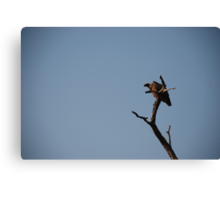 White-backed Vulture in the tree Canvas Print