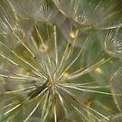 Heart of dandelion by Régis Charpentier