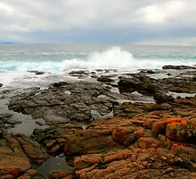 Coast at Killalea by Michael Matthews