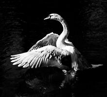 In a Flap by William Rottenburg