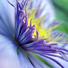 Clematis Macro Color Print by William Martin