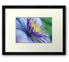 Clematis Macro Color Print Framed Print