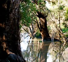 River Reflections - Nagoa River, Emerald. by Margaret Stanton