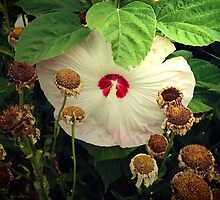 Life and Death in the Garden by RC deWinter