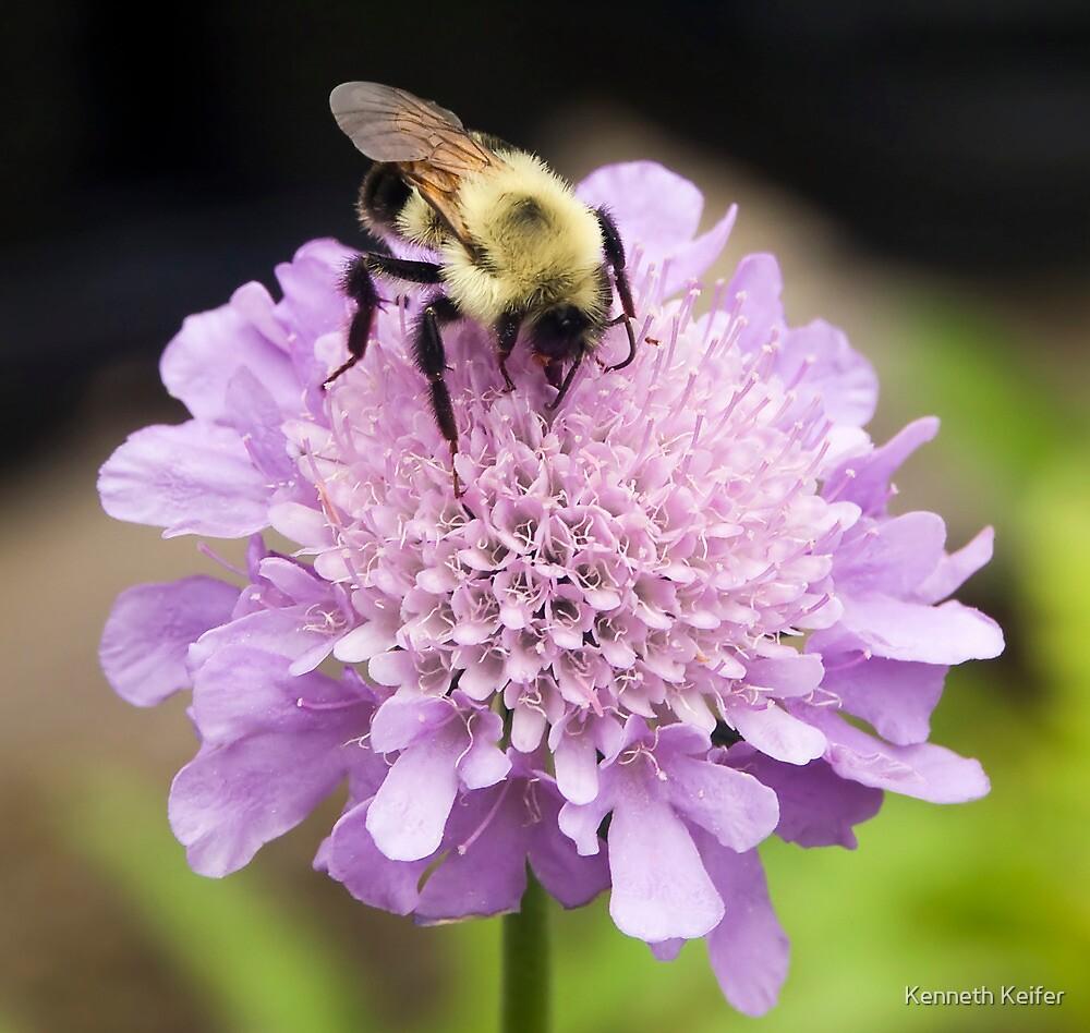 Bee on Pincushion by Kenneth Keifer