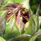 A Sunflowers Beginning by PatChristensen