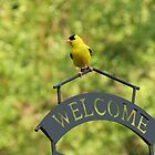 American Goldfinch by Ron Russell