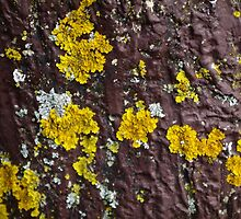Yellow Splotches by lillieemilie