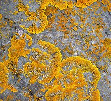I Lichen by 2cimage