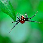 Amazing spider man by Spacehunter