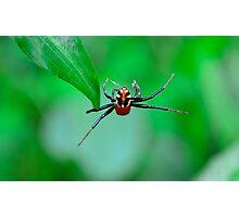 Amazing spider man Photographic Print