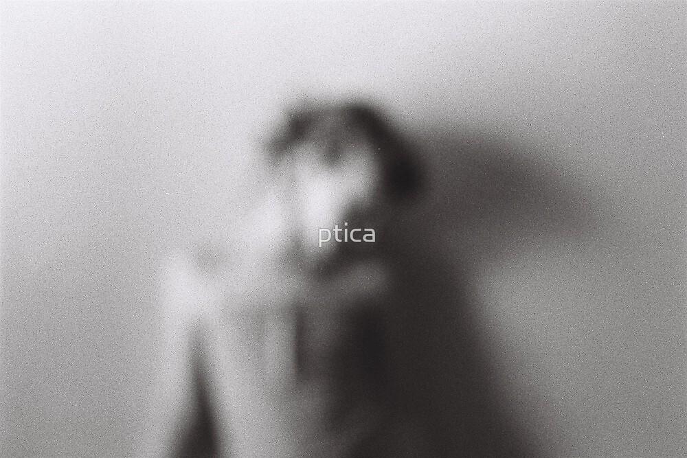 dream a little dream  by ptica