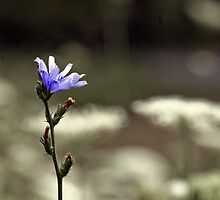 Wildflower Blue by Eric Weiand