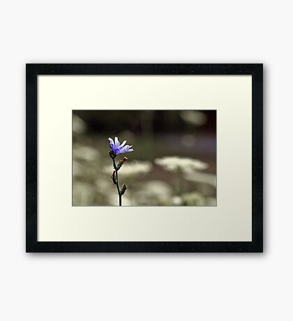Wildflower Blue Framed Print