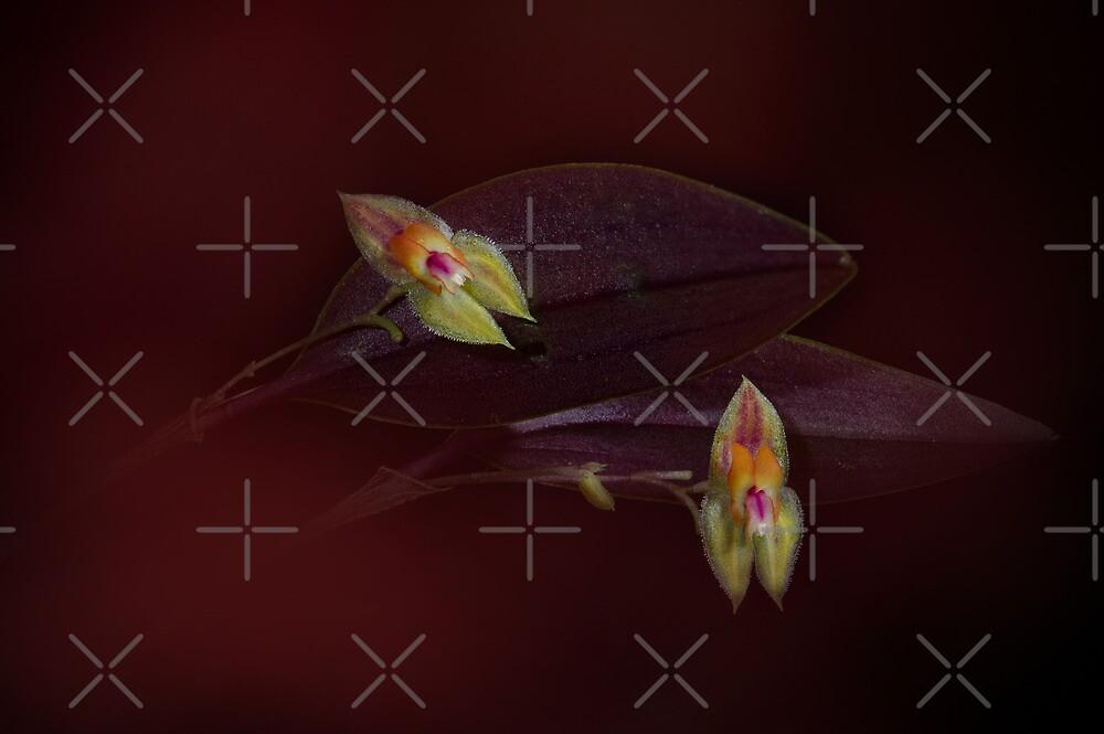Beautiful tiny Orchids by EbyArts