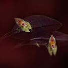 Beautiful tiny Orchids by EbyArts