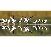 Banded stilts stretching Photographic Print