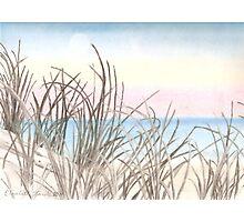 Black Reeds Photographic Print