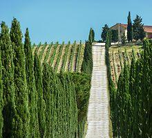 Toscan/Kianti/Italy by RAN Yaari