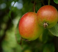 Apple Tree by lillieemilie
