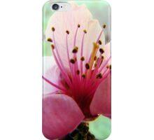 Peach Blossom Stamens iPhone Case/Skin