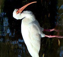 White Ibis by Eva Kato