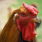 Tommy's Rooster by STEVIE KRUEGER