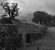 Broken Tree - Roche Moutonnee.Langdale,Chapel Stile. by Mark Haynes Photography