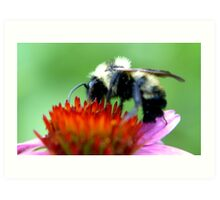 Bumble Bee on Cone Art Print