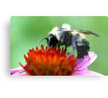 Bumble Bee on Cone Metal Print