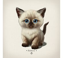 Cataclysm- Siamese Kitten Classic Photographic Print