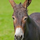 Mule Portrait by Margaret S Sweeny