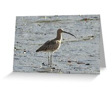 """ Curlew On Mudflats "" Greeting Card"