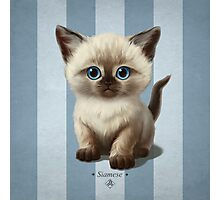Cat-a-Clysm: Siamese kitten Photographic Print