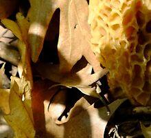Segregated Spores by STEVIE KRUEGER