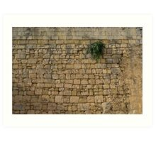 Life on Bare Rock - Up High on the Fortification Wall Art Print